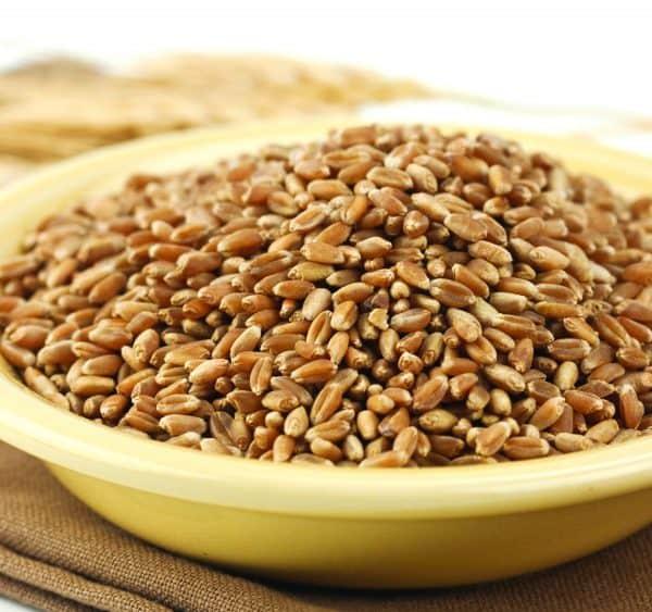 Hard Red Winter Wheat-0